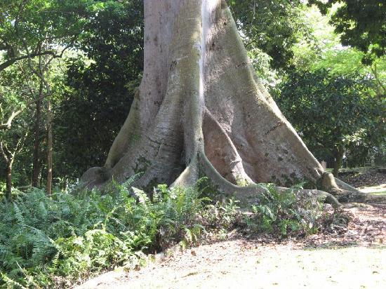 Tree house photo de jardin botanique de singapour for Jardin botanique singapour