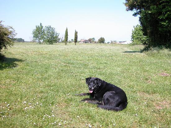 La Pertuzerie : le sympatique chien de la maison