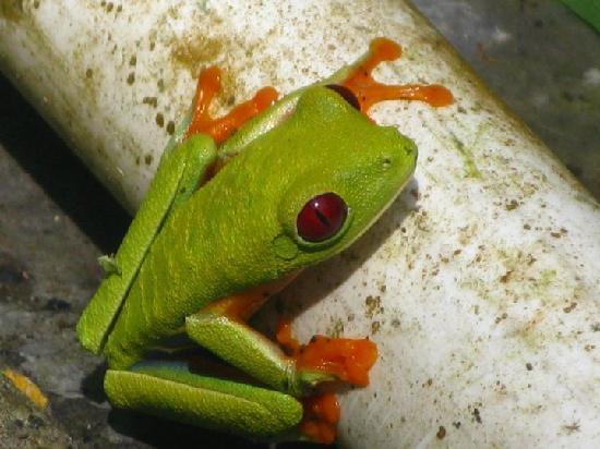 Casas La Selvatica : Frog Friend