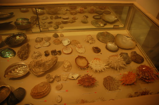 Alice Garg National Seashells Museum