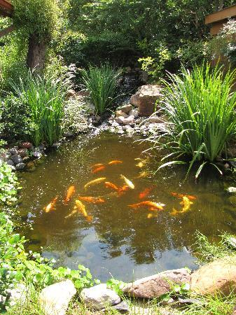 BEST WESTERN Dinosaur Valley Inn & Suites : Koi pond
