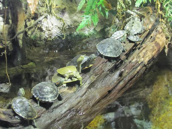 Mississippi Museum of Natural Science: Lots of turtles