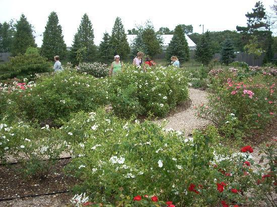 The Rose Garden in the back of the property - Picture of Roger ...
