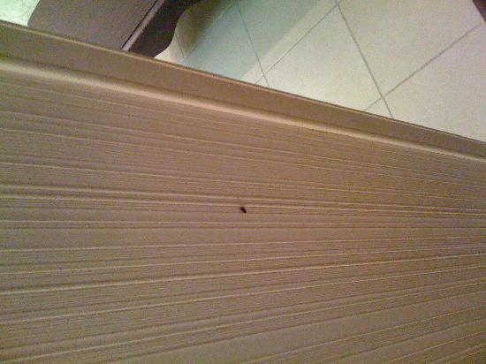 Homewood Suites by Hilton Raleigh Crabtree Valley: one of three bugs we saw...