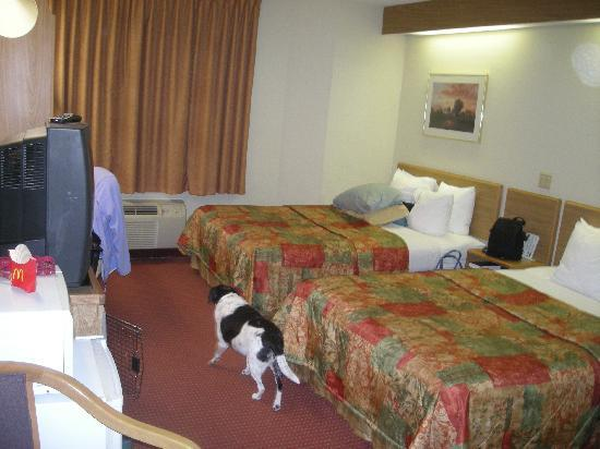 Days Inn Olathe Medical Center : Our dog checking out the room.