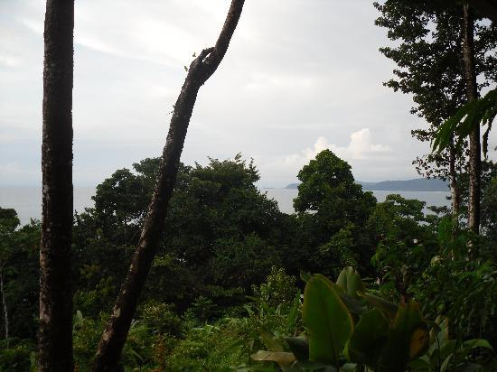 La Paloma Lodge: View from our bungalo - the macaws and toucans love the area