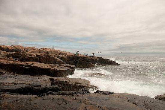 Winter Harbor, ME: Waves at Schoodic Point