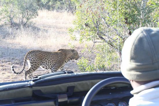 Singita Boulders Lodge: Leopard