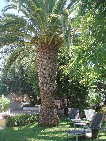Quinta do Caracol : Garten
