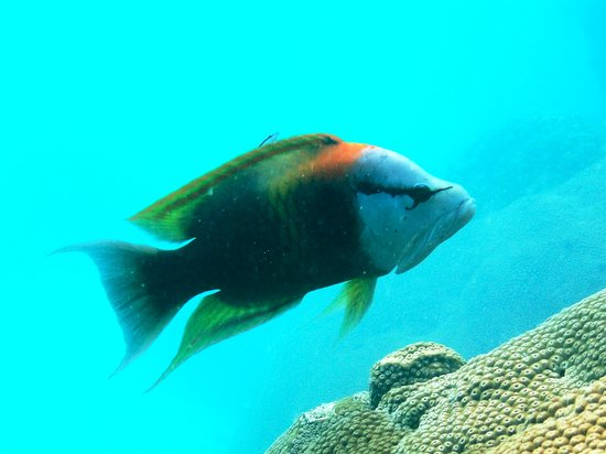 Bandara Resort & Spa: One of thousands of fish