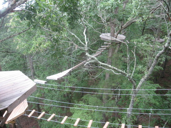 Historic Banning Mills Zip Line Canopy Tours: IN THE TREES