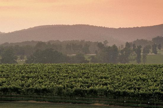 Keswick, VA: Vineyard