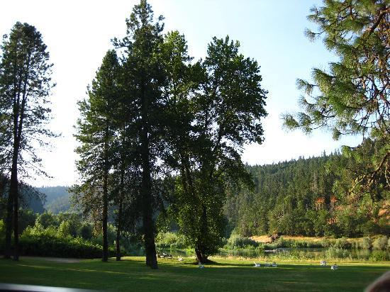 Morrison's Rogue River Lodge: Beautiful expansive lawn along the river