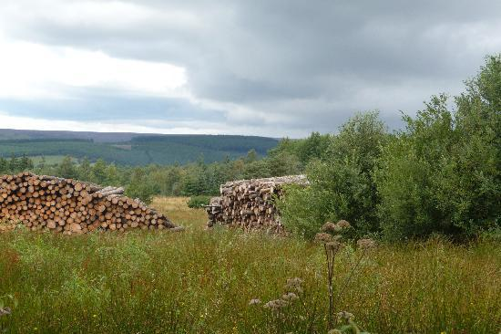 High Muffles: View across the forest & moors