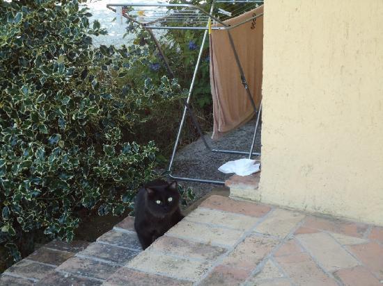 Agriturismo ColleParadiso: Il mio gatto!
