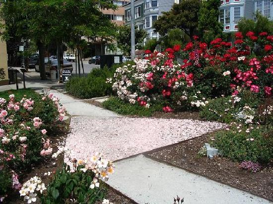 Cruisin' The Castro Walking Tours: America's first Pink Triangle Memorial Park remembering homosexuals pursecuted during WWII