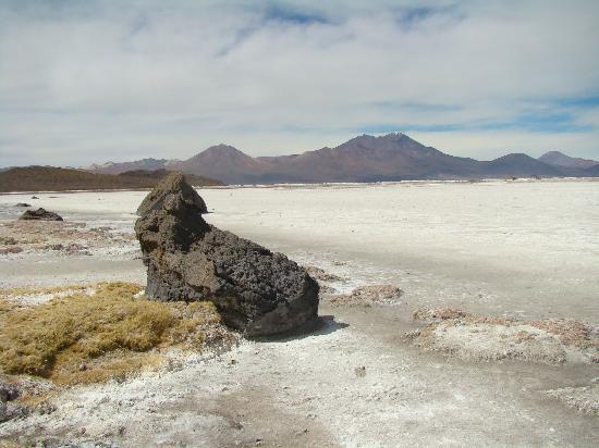 Arica, Chile: Salar de Surire, provincia de Parinacota