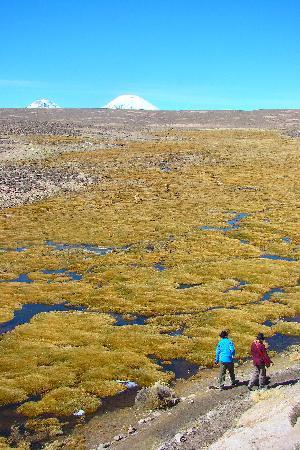 Arica, Chile: Sendero de Trekkin Las Cuevas, Parinacota