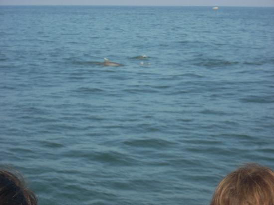 Silver Bullet Tours: dolphins