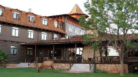 El Tovar Hotel: Elk in the morning