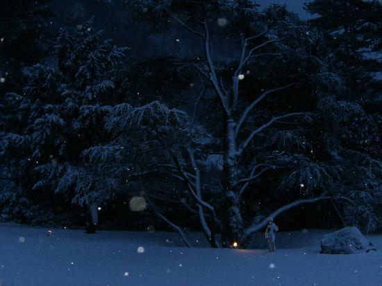 Parkhotel Sonnenhof - grounds at night with snow