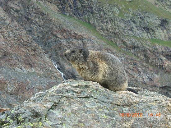 Saas-Fee, Suisse : Meet my new friend