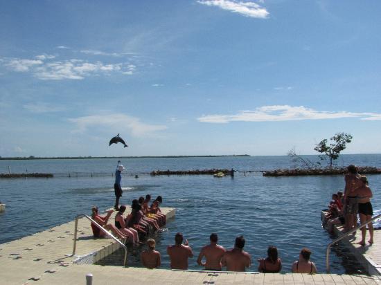 Dolphin Cove Cayman : Dolphin