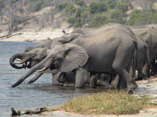 Maun, Botswana: Lunch view on the Chobe river