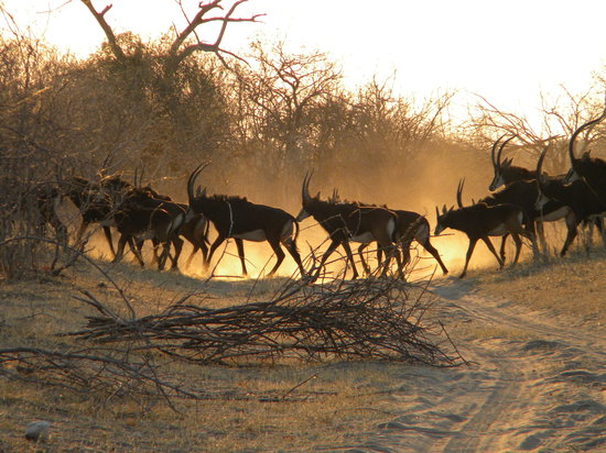 Lastminute hotels in Maun