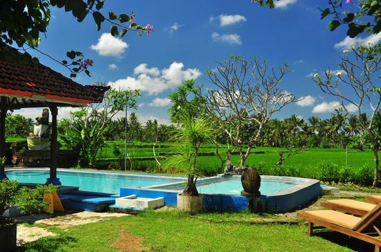 Peliatan, Indonésie : Pool with a view at the rice paddies