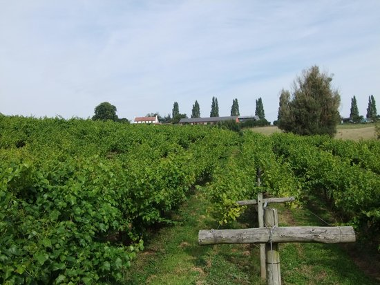 Newent, UK: View from the vineyard back to the rooms