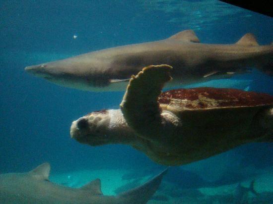 Turtle Picture Of New York Aquarium Brooklyn Tripadvisor