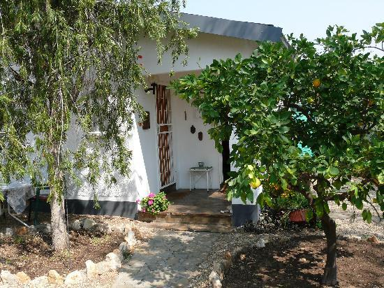 Guesthouse OL-GA : Un oranger devant la porte