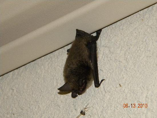 Elmira, Nova York: The Bat (was over entranceway)