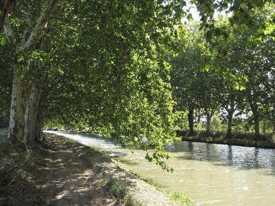 Port Minervois : le canal du midi sous les 100 000 platanes