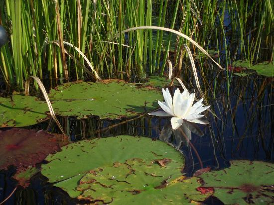 Blue Moon Retreat: A lovely pond full of waterlilies