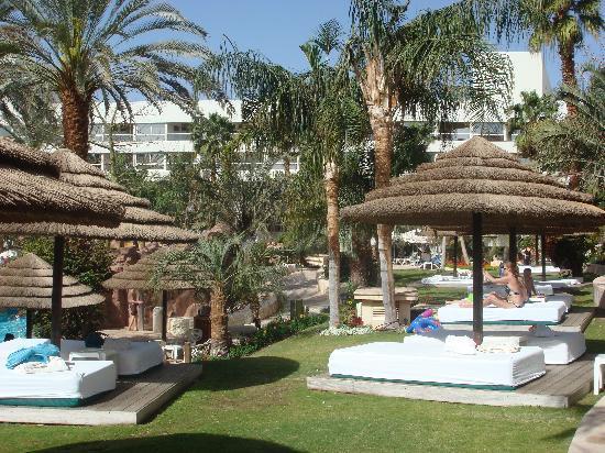 Isrotel Royal Garden: sunbeds