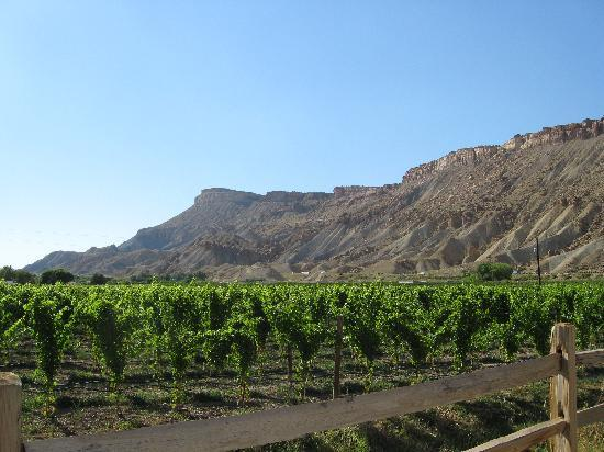 Palisade, Kolorado: Surrounded by the vineyards