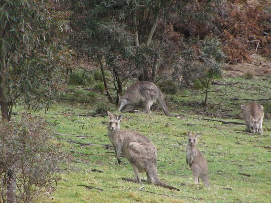 Melaleuca Mountain Chalets: our visitors