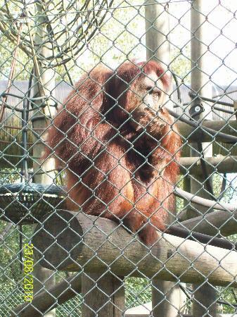 Monkey World: Fantastic Enclosures