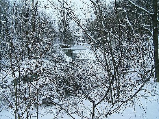 Contented Acres Bed & Breakfast: Wintertime at the creek