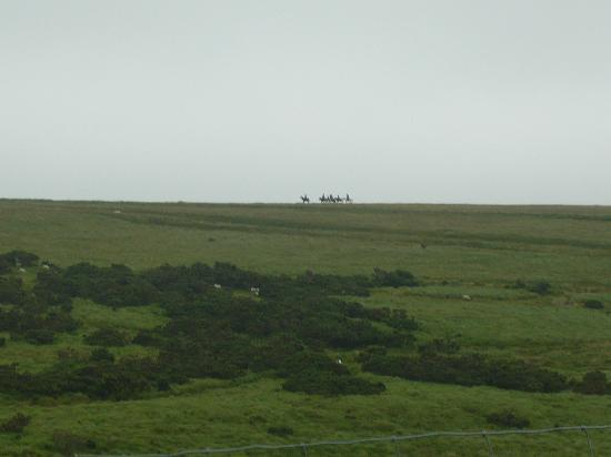 Cholwell Riding Stables: Out in the distance