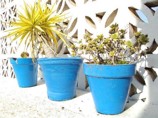 Ayamontino: Detalle de los jaridnes