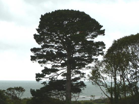 Bron Eifion Country House Hotel: View from gardens
