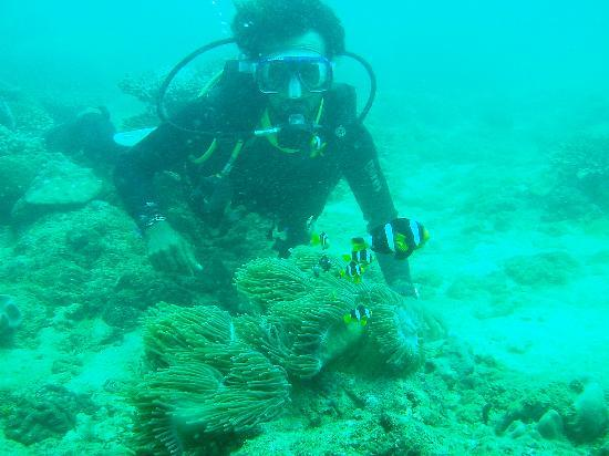 Pigeon Island Beach Resort: Diving off Pigeon Island
