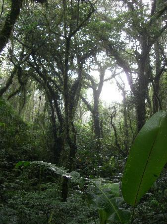 Santa Elena, Kostaryka: Scenery