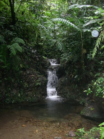 Santa Elena, Kostaryka: cloudforest waterfall