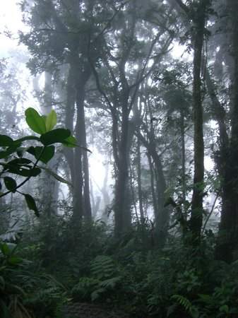 Santa Elena, Costa Rica: cloud coming in over the cloudforrest
