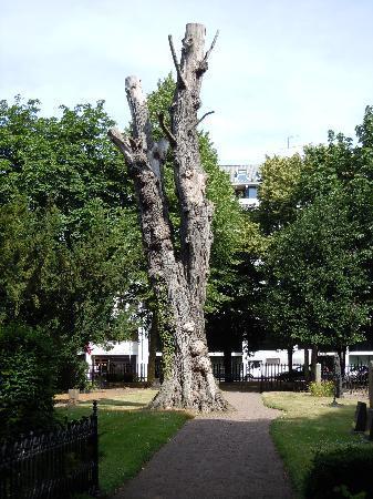 สวีเดน: Tree at malmo cemetary