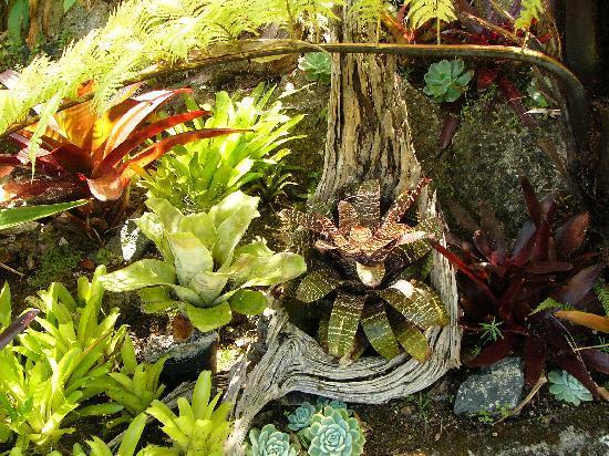 Top Storey B&B: Garden Bromeliads
